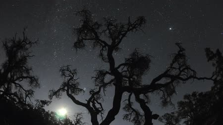 carrancudo : moon and stars rising over nature scene