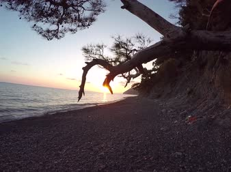 pinho : Mediterranean sunset through the pine trees