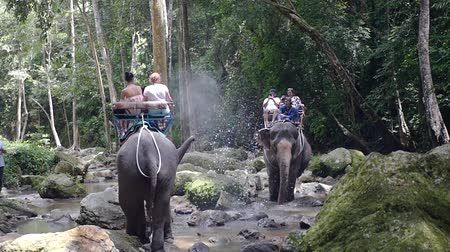 keeper : 05052018 Thailand, excursion on the elephants to the waterfall. tourists elephant food by the creek Stock Footage