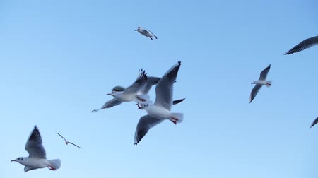 group of seagulls flying in slow mo against a blue sky