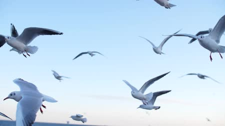 a group of seagulls flying in a slow mo on the sea, against the sky