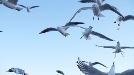 seagulls fly in slow mo