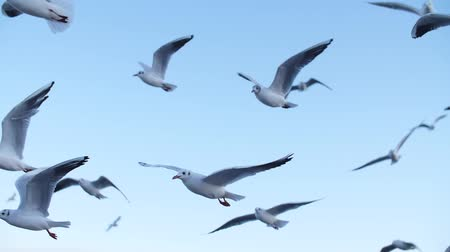 a group of seagulls fly in a slow motion against the blue sky