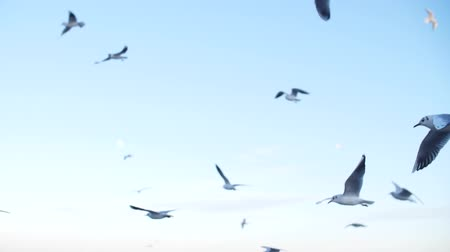 a group of seagulls fly in a slow motion against the background of a blue sky turning into a horizon that goes into defocus