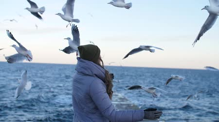 flying sea gull : a girl in a gray down jacket, with her back stretching her hand to the flying seagulls Stock Footage
