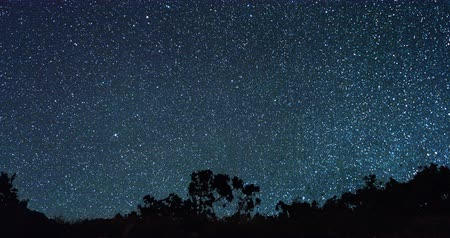 starlit : Panorama of forest in the background of the starry sky. TimeLapse Stock Footage