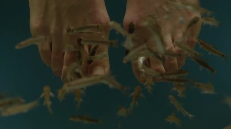garra : Garra Ruga pedicure in slow motion Stock Footage