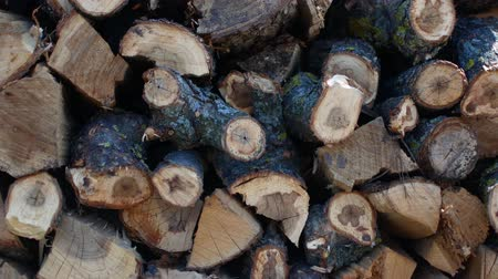 eukaliptus : Chopped birch firewood. A pile of firewood. Woodchopping. Shredded and stacked wood