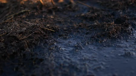 there : Flies sit on a heap of dung. Rural video