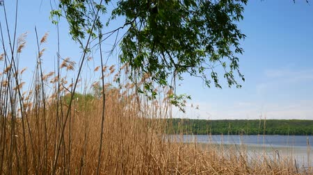 plain : Reservoir in Ukraine, a simple landscape Stock Footage