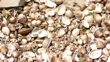 calcário : Wet colored seashells on the beach, river