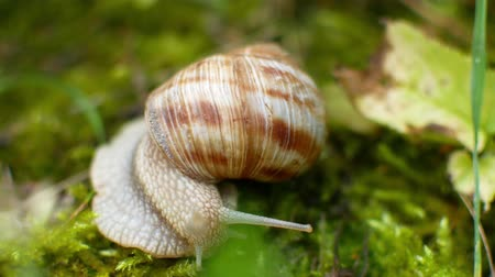 hera : the snail crawls in the green grass.