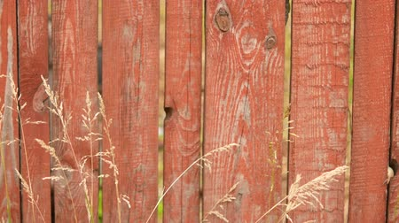 terrakotta : Wooden fence and grass on the meadow in the village in the morning.