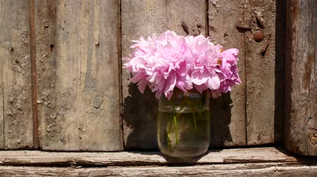 piwonia : Flowers in a jug outdoors.