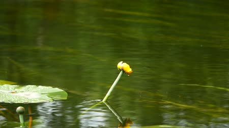 partially : dragonfly sitting on a lily and fly.