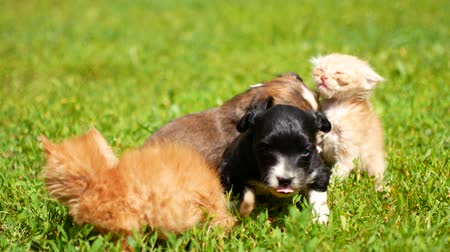 kittens and puppies are playing on the grass.