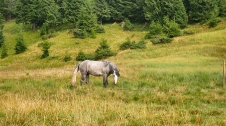 tampado : A lonely horse grazes in the mountains. Carpathians.