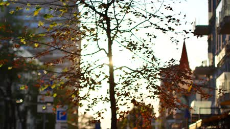 trough : Morning in the city. Sun rays through the autumn foliage. Stock Footage
