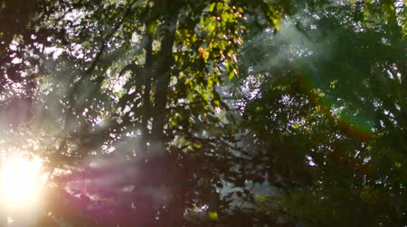 White smoke rises. Fire in the woods. Outdoor recreation. Summer time. The green leaves of the trees. Background in 4K Dostupné videozáznamy