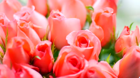 sıkı : gentle big bouquet of peach roses, close-up