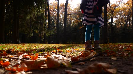 meşe palamudu : Little girl collects acorns in the autumn forest.
