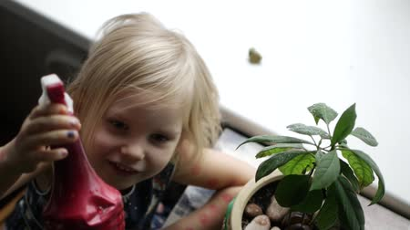 watering can : Little farmer grows avocados in a pot.