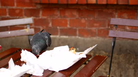 passer by : A bird in an outdoor cafe sits on a table and eat leftover food.