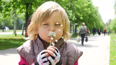 sementes : Happy child blowing dandelions. Little girl with fluffy dandelion.