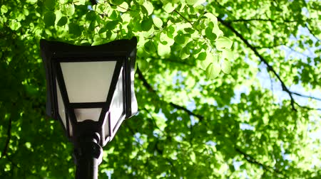 sokak lâmbası direği : Street lamp on a background of green leaves and trees in the park.