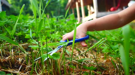 trimmelés : Child girl cutting grass on a lawn with scissors. Stock mozgókép