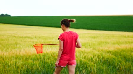 мотылек : The girl catches a butterfly net in the field. Стоковые видеозаписи