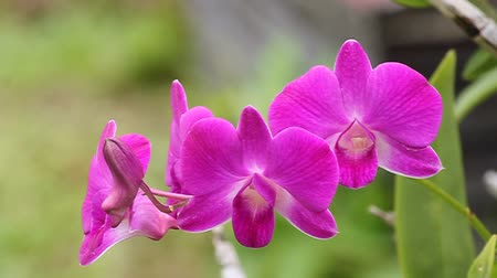 orchideák : Beautiful orchid