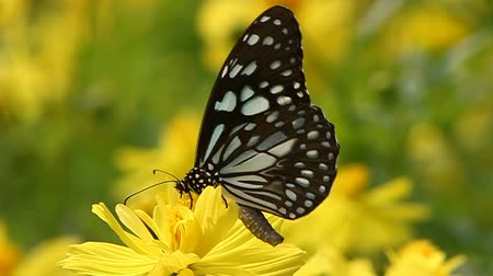 canteiro de flores : butterfly on flower