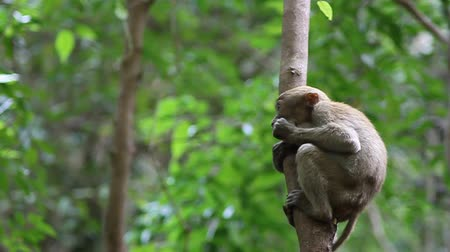 Канчанабури : Monkey in Erawan National Park Kanchanaburi province. Стоковые видеозаписи