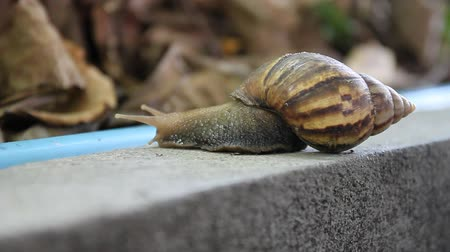lonely : snail Stock Footage