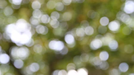 просвет : bokeh blurred out of focus background