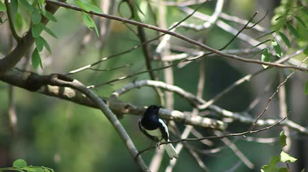 bird species : Footage A beautiful  bird on a bright sunny summer day Stock Footage