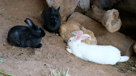 alerta : Cute rabbit sitting in rabbit stall. Animal nature habitat, Life.