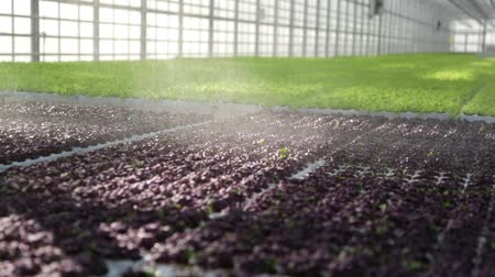 biber : Inside the greenhouse with seedlings