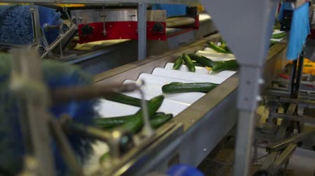 florete : Packaging machine for cucumber at factory