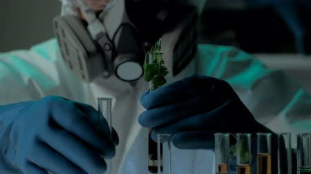 engineered : Bio laboratory experiment with germ of GMOs plant. Scientist in protective mask and gloves adds nutrient solution into test-tube with green plant. Shot can be used in video about genetic technologies, the problems of people hunger, solutions of food probl Stock Footage