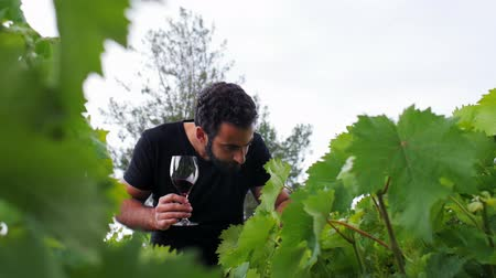fruitful : A young winemaker go through his winery, inspect the leaves and drink his red wine Stock Footage
