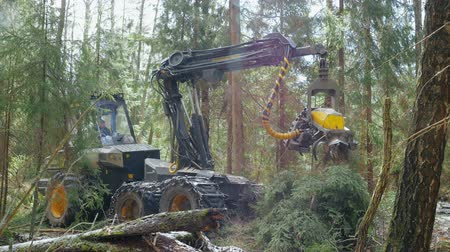 лесозаготовки : Timber cutting machinery working in forest. Destruction forest nature