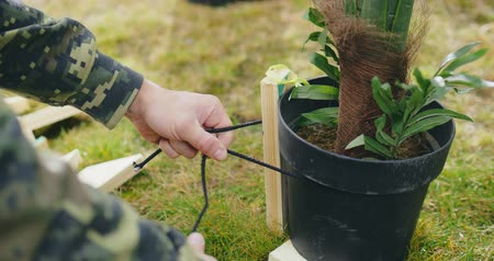 at the stake : Close up of gardener tending his garden Stock Footage