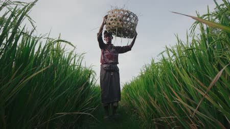 hasır : Indian farmer removing wicker basket from his head Stok Video