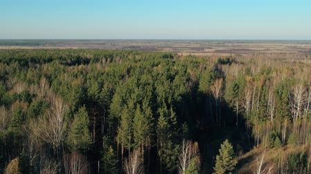 Beautiful mixed pine and deciduous autumn forest of Siberia
