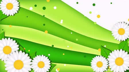 Summer green background with chamomiles