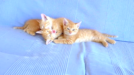 kočička : Little kittens playing on a couch