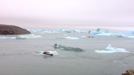 úszó jéghegy : Ice rocks floating on Jokulsarlon lagoon in Iceland