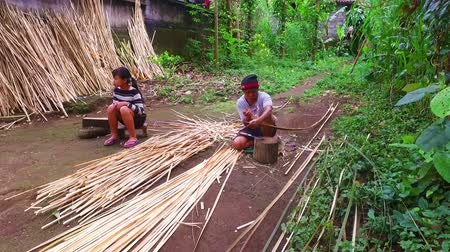 Cutting bamboo for commercial use on Java Indonesia